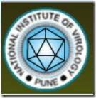 jobs in national institute of virology